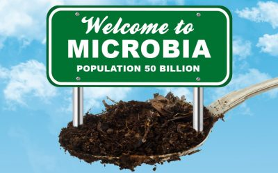 Microorganisms: The Living Engine of Soil—Part 1