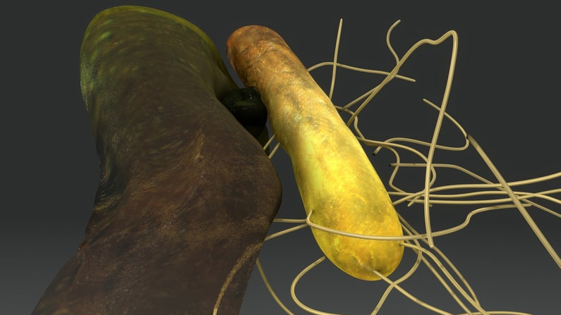 Microorganisms: The Living Engine of Soil—Part 3