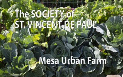 BHN Assists St Vincent de Paul Mesa Urban Farm