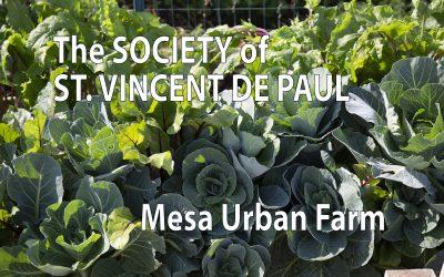 BHN Assists St Vincent de Paul Mesa Urban Farm