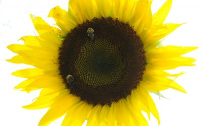 Earth Day 2019: Protect the Pollinators